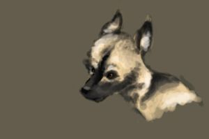 African Painted Dog by Doomed-to-sock