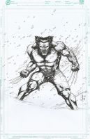 wolverine by ashkel