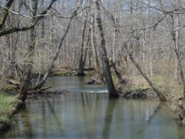 River in the Woods..Again 4 by Rissa1123