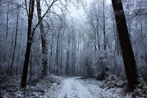 Walking Through The Winter Forest by Caillean-Photography