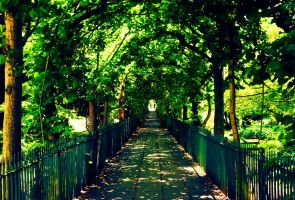 Up the Garden Path by tugalot