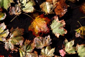 Puddles Leaves by XxQuothTheRavenxX