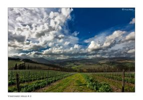 Vineyard Hills_3 by Marcello-Paoli