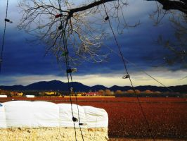 Cotton Bale and Incomming Storm by SharPhotography