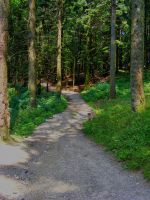 Forest_Path_stock by drowned-in-air-stock