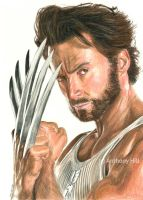 Wolverine by Wanted75