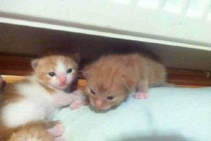 meh kittens im getting !! by olivia9987