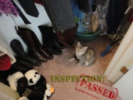 Inspection complete by DreamerWhit