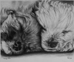 Drawing: Two Sleeping Devils by skylineaddict