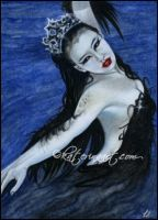 Black Swan by Katerina-Art