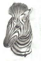Zebra by Zexion-the-gamer