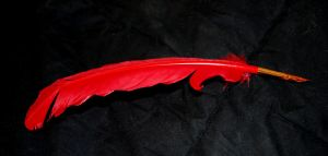 red quill by objekt-stock