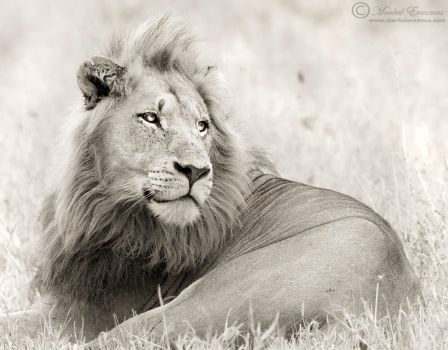 Mane Man by MorkelErasmus