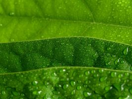 Water drop on leaves 29 by eco6org