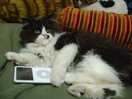 Kitty with Ipod by HowlingWolfSong