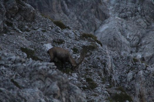 stone goat in the alps by F3ras