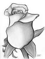 Shaded rose by SethWolfshorndl
