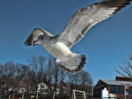 Seagull by WistfulDesigns