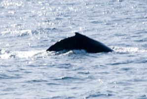 Whale Back, Up Close by Miss-Tbones