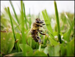 Bee view by Renato9