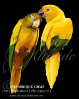 Golden parakeet (Guaruba guarouba) by namu-the-orca