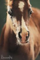 Foals portraits 02 by MsCarmen