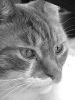 Cats Eyes by esCap3