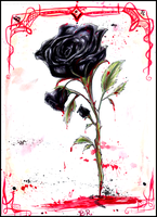 Black Rose by Ame-Kunoichi
