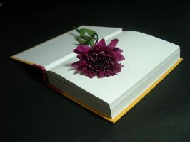 Flower and Book 1 by disenchantedstock