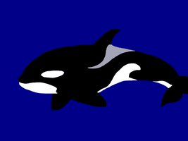 Orca Minimalist Wallpaper by organizationXIIIfan1