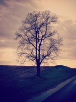 One Tree by AwakeYourSoul
