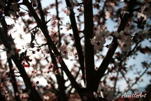 Spring time by aNNeTTs