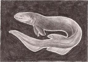 Frilled Shark ATC for *MansonHeartagram by whitetippedwaves