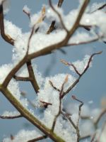 Fragility of snow by pagan-live-style