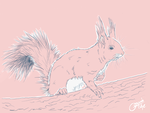 Squirrel Studies~ by oonami