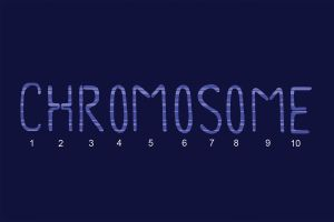 Chromosome by Pheelip2010