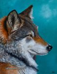 The Wolf by KathrynWhiteford