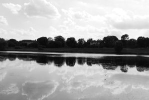 .Reflected in Grey. by decayedroses