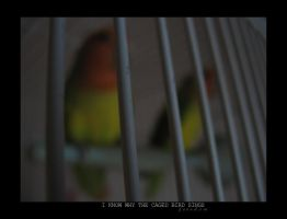 Caged Bird by mjjfan4life