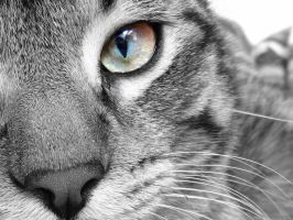 Cat Eyes III by LauraPower22