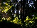 Summer Afternoon in the Forest by helice93