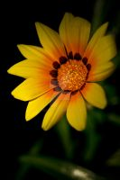 Yellow. by Gas-Hed