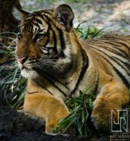 Cub Scout by JonShotFirst