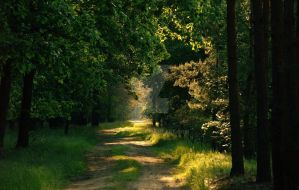forest road by Wielgos