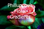 Phillupus Floral Gradients by ladycompassion
