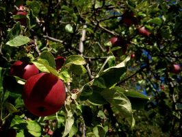 AppleTree2 by cyclone866