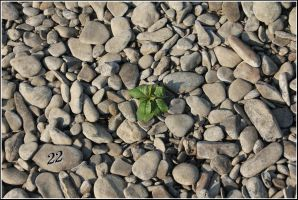 One single plant by 22photo