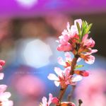 Spring Flower by nnIKOO