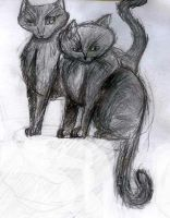 Warrior cats drawing: sitting on something by iamblossom