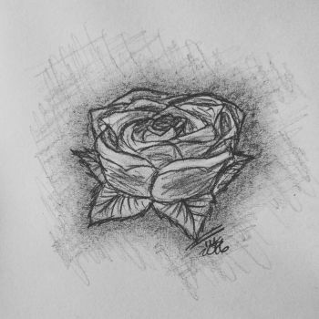 Sketchy rose by tusss